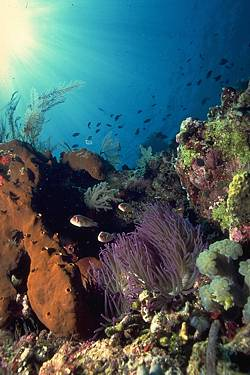 Reef ecology - Similan Island scuba diving Thailand