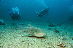 Shark Point Phuket scuba diving Day trip Thailand diving vacation Similan Island tour Phi Phi Island